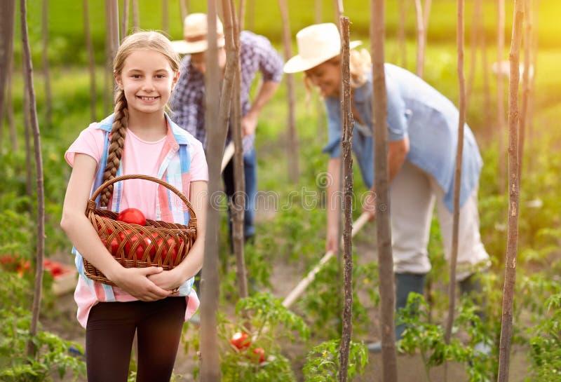 女孩举行篮子用新近地被采摘的蕃茄 图库摄影