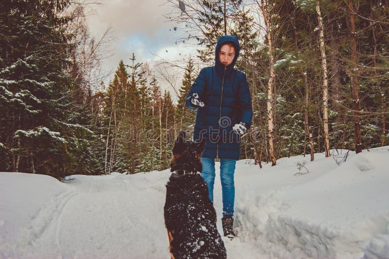 女孩使用与一只德国牧羊犬 库存照片