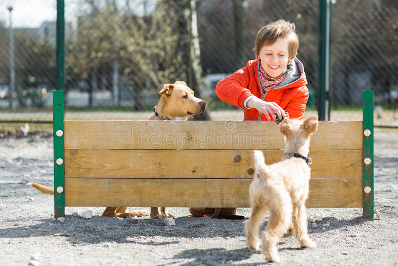 女孩使用与两条狗在障碍附近 免版税图库摄影