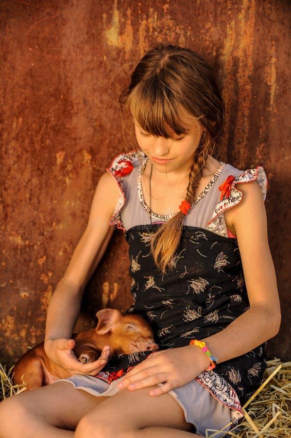 女孩使用与杜勒克猪品种的红色新出生的猪 有同情心和关心的概念对动物 库存照片