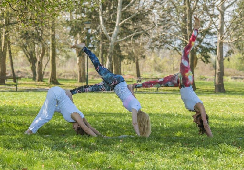 女孩做瑜伽的小组 免版税库存照片