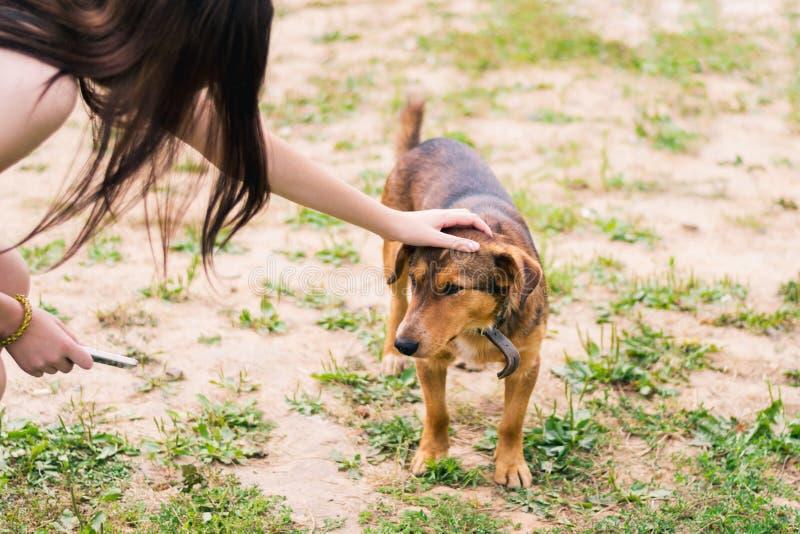 女孩冲程棕色光滑头发的狗头在衣领的 免版税库存照片