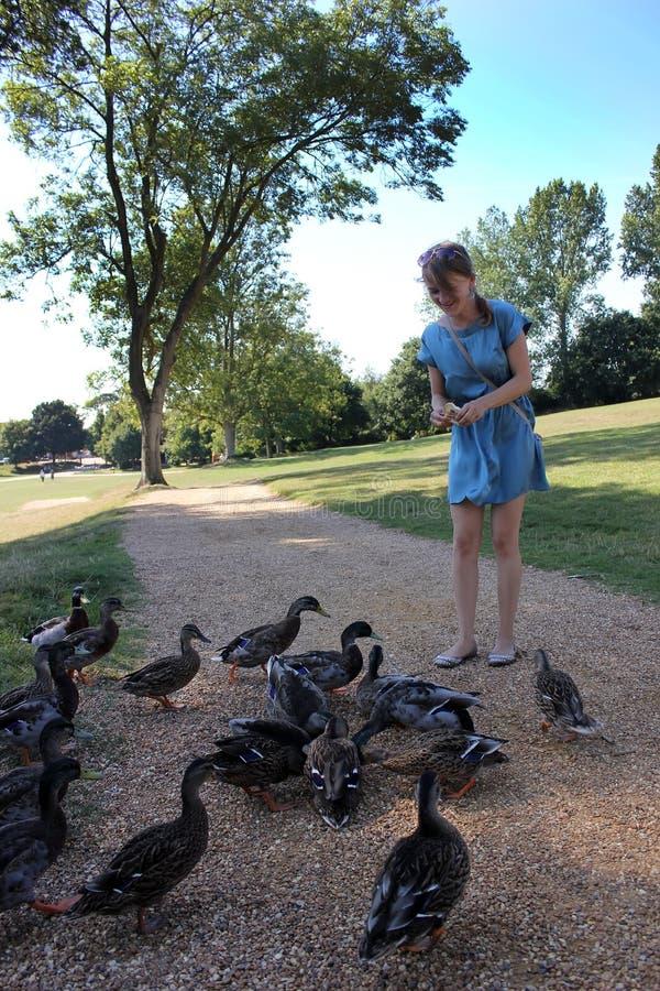 女孩分泌乳汁鸭子在公园 库存图片