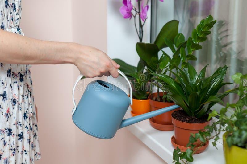 女孩卖花人浇灌了从喷壶的房子植物 在窗台是一个罐兰花、zamioculcas和dieffenbac 免版税库存图片