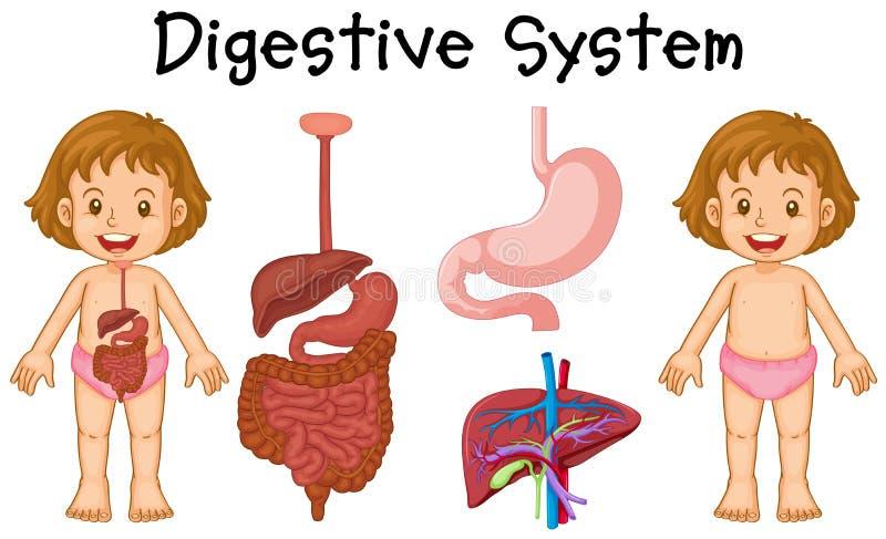 download 女孩和消化系统图 向量例证.图片