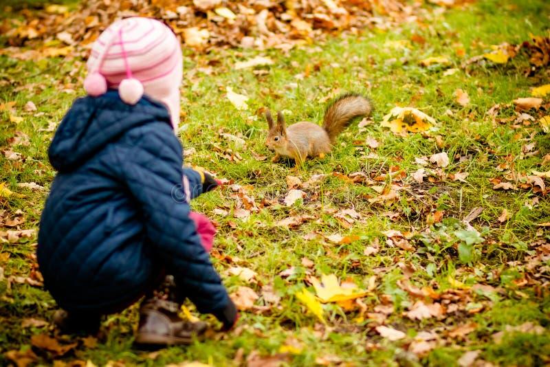 女孩哺养的灰鼠在秋天公园 蓝色军用防水短大衣和棕色皮靴的小女孩观看野生动物的  免版税库存照片