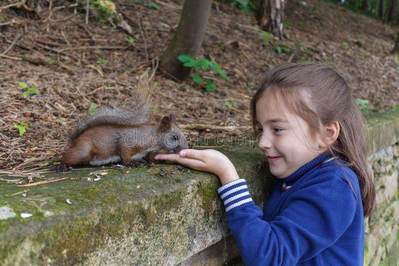 女孩哺养的灰鼠在秋天公园 免版税图库摄影