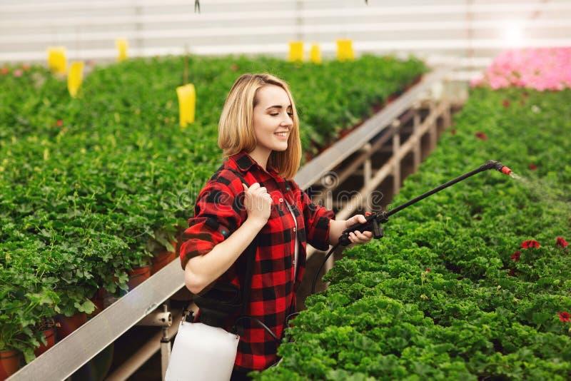 女孩喷洒植物 工作自温室的女孩 肥料植物 免版税库存图片