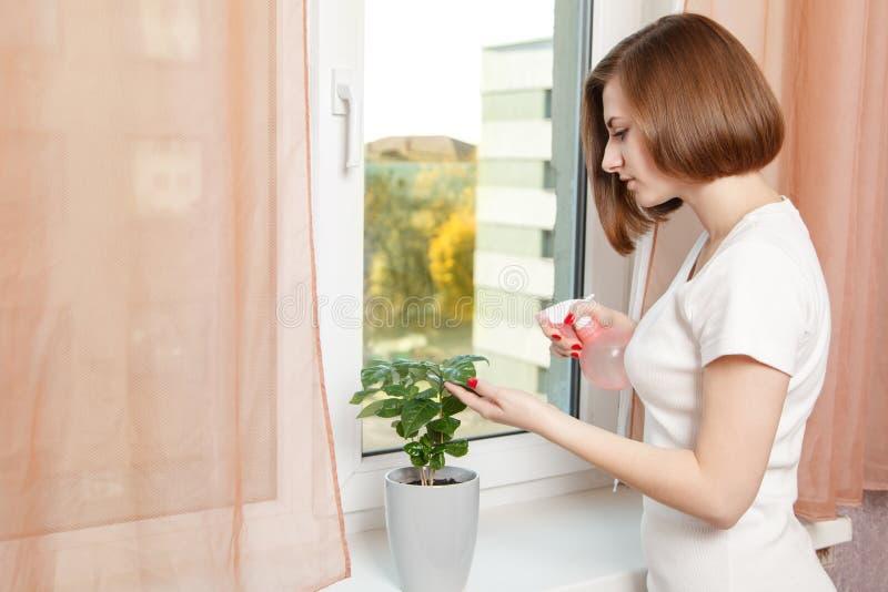 女孩喷洒房子植物 库存图片
