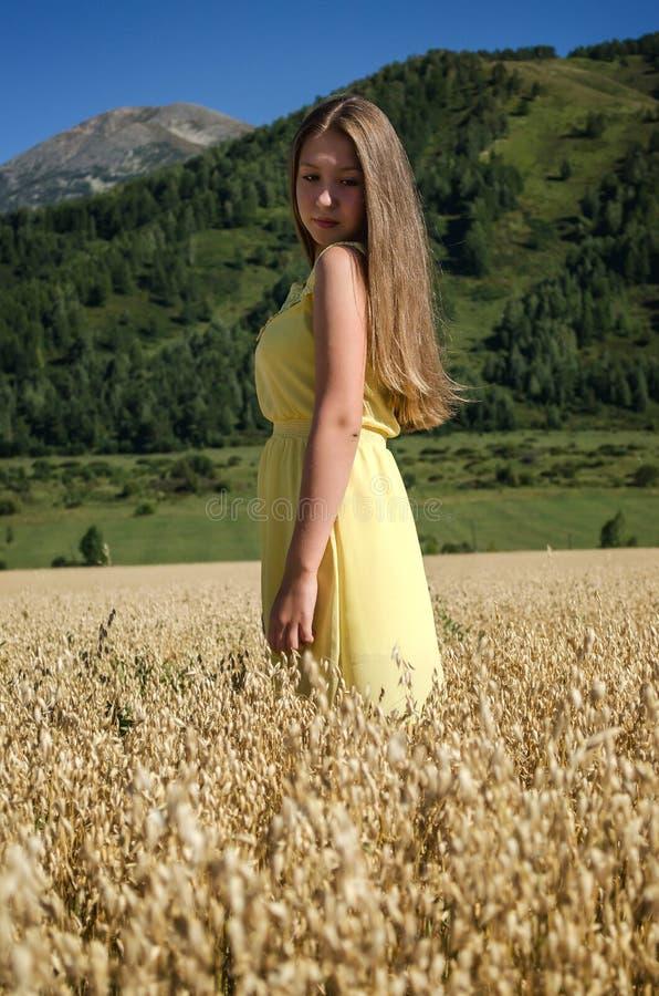 女孩在一个领域站立用燕麦 库存图片