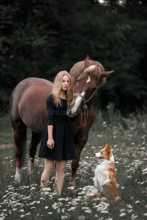 女孩在与狗和马的一个领域走 免版税图库摄影