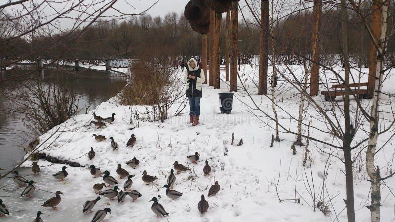 女孩在喂养鸭子的公园 免版税库存图片