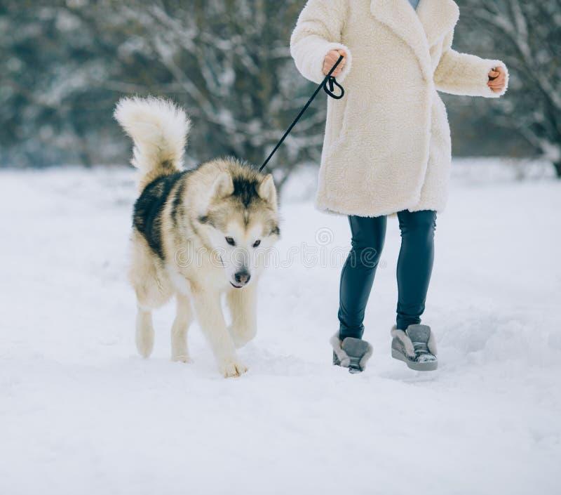 女孩在多雪的森林里走并且带领在皮带的一只狗阿拉斯加的爱斯基摩狗 免版税库存照片