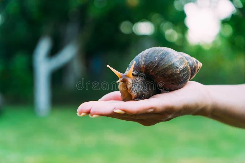 女孩在她的手上拿着一只蜗牛 一只大良种蜗牛在公园的背景中 库存照片