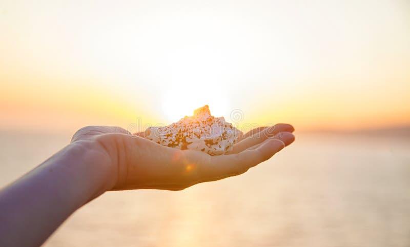 女孩在手上拿着一个海扇壳在日落反对海 免版税图库摄影