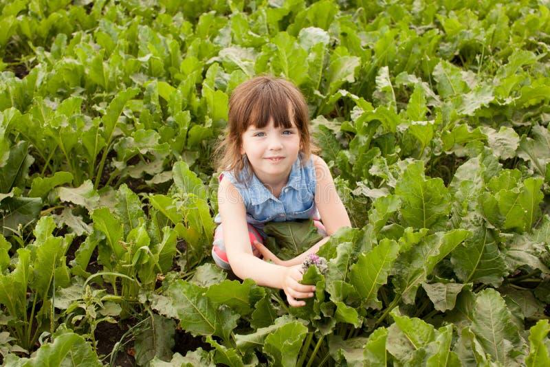 女孩在甜菜领域的4年 库存照片