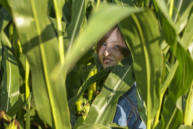 女孩在麦地掩藏 图库摄影