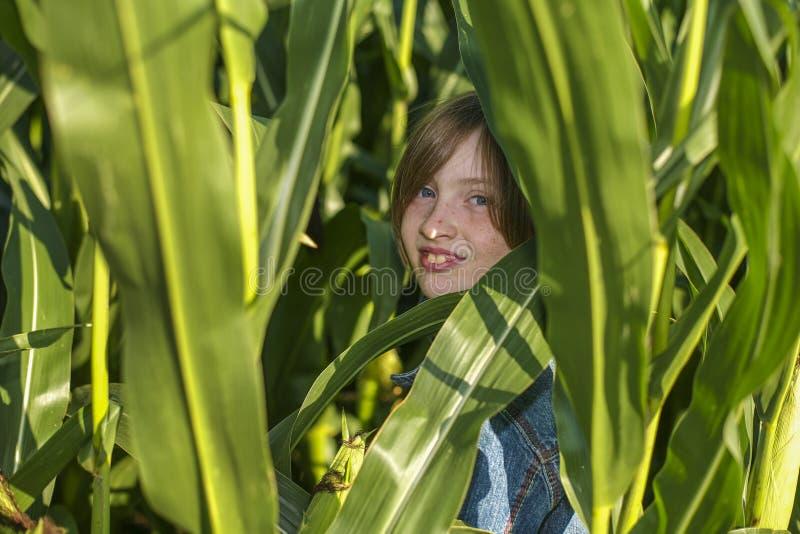 女孩在麦地掩藏 免版税库存图片