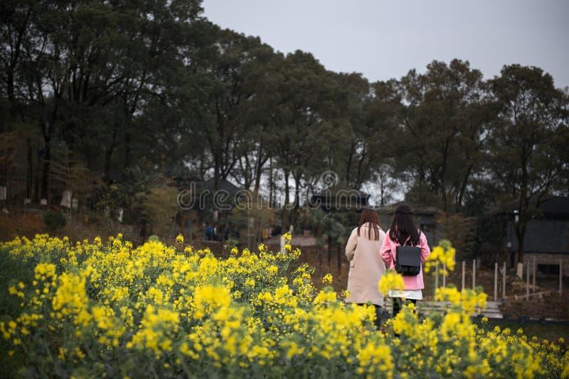 女孩在黄色油菜籽花的` s剪影 图库摄影