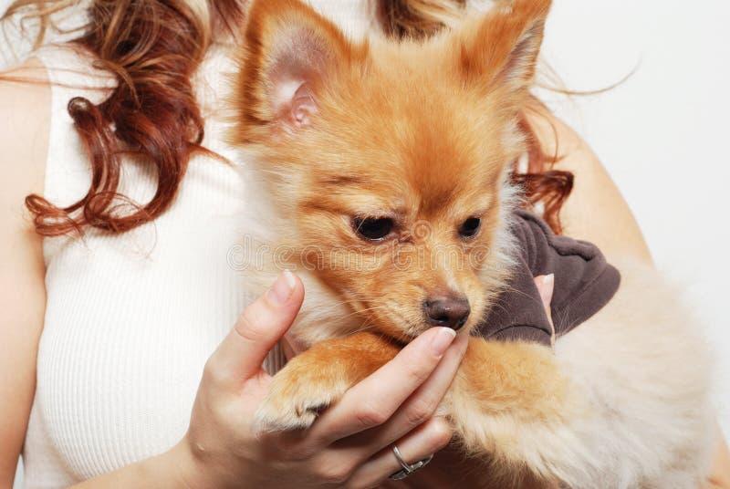 女孩她的宠物 库存照片