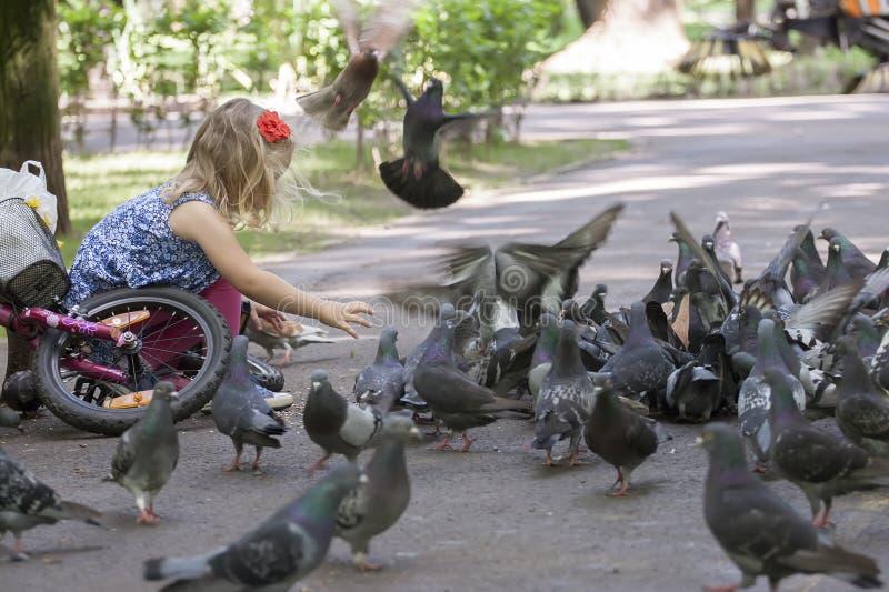 女孩小的鸽子 免版税图库摄影