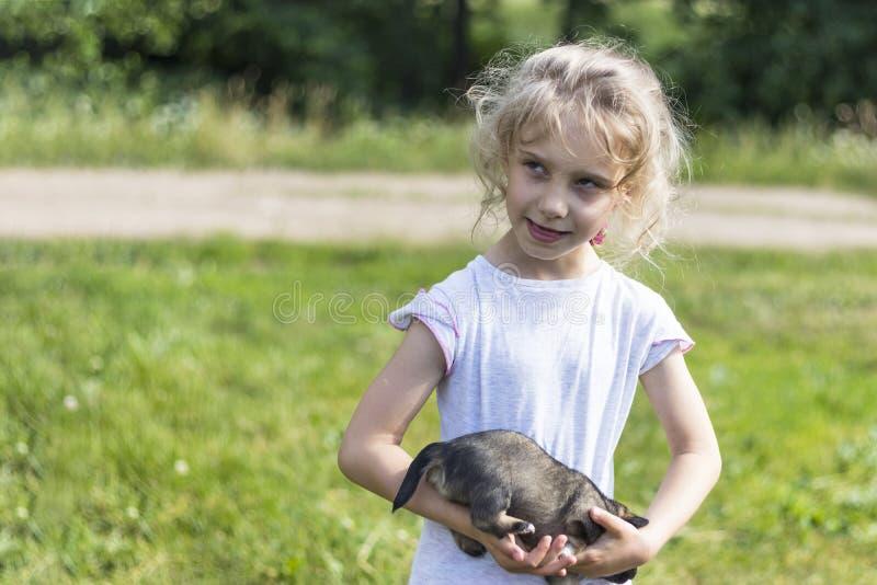 女孩拿着一只非常小小狗 ?? r 库存图片