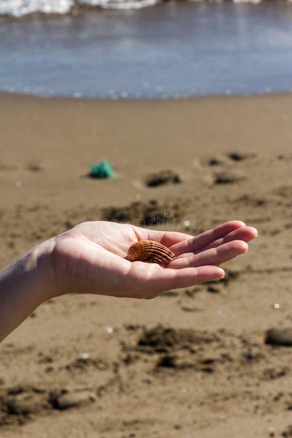 女孩拿着在她的手上的壳 图库摄影