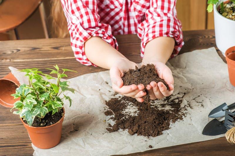 女孩拿着地面 格子衬衫的一个女孩在家将移植盆的植物 土地,幼木,手 免版税图库摄影
