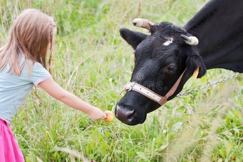 女孩提供的母牛 免版税库存图片
