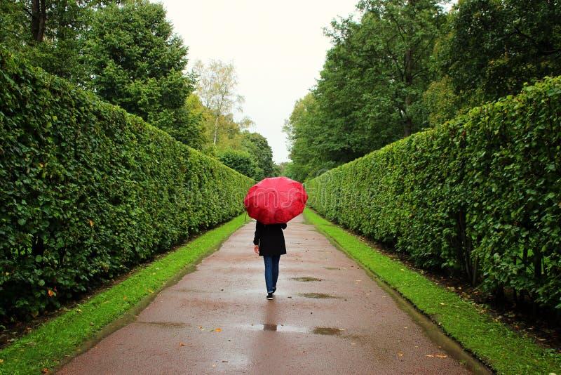 女孩沿从灌木的绿色胡同走在与红色伞的雨中 免版税库存照片