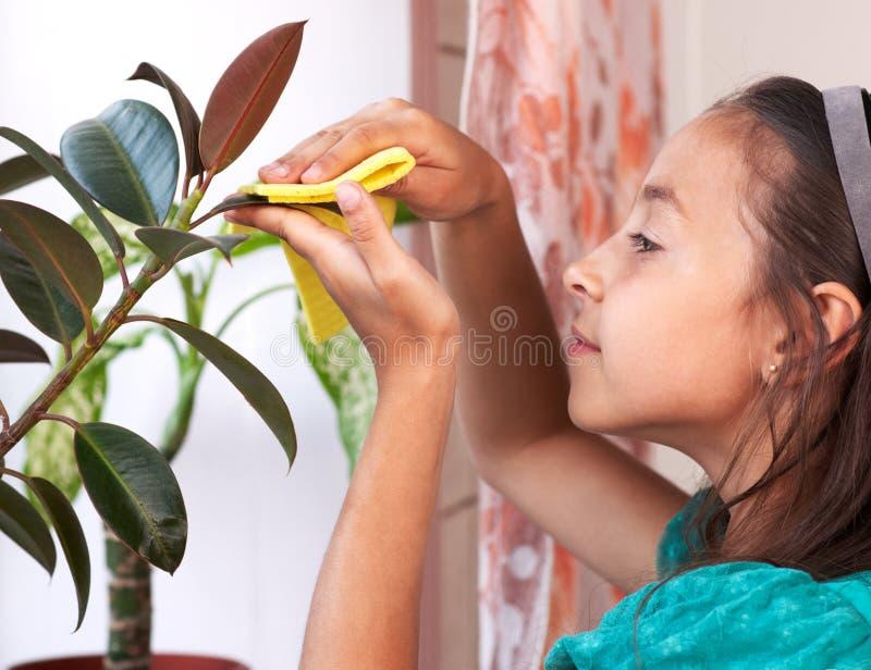 女孩清除从叶子的尘土 免版税图库摄影