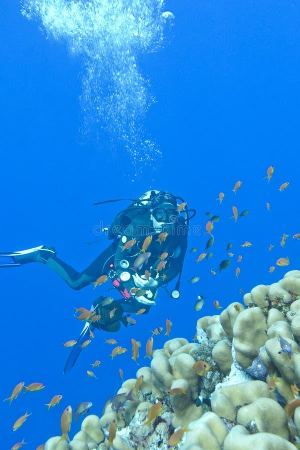 女孩潜水者和珊瑚礁在热带海, uinderwater 免版税图库摄影