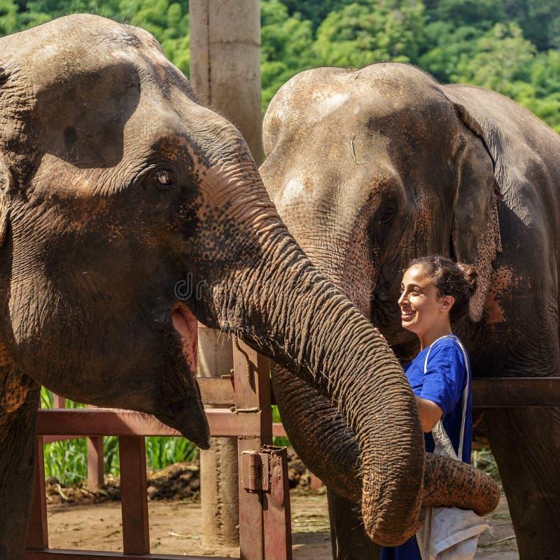 女孩照顾大象在一个圣所在清迈密林  免版税库存照片