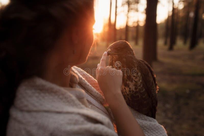 女孩的画象和猎鹰看看彼此在落日的光芒 库存图片