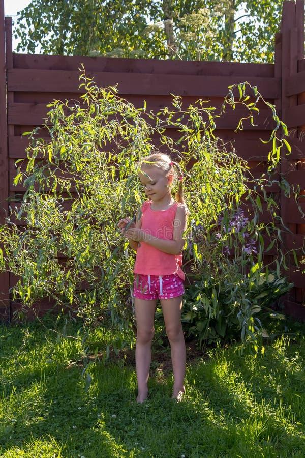 女孩看在年轻杨柳的叶子 库存图片