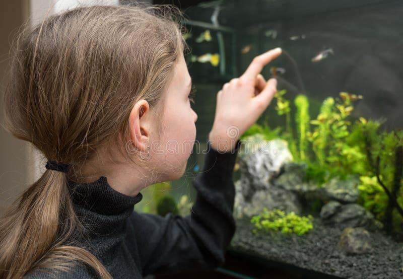 女孩看鱼 免版税库存照片