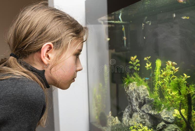 女孩看鱼 免版税图库摄影