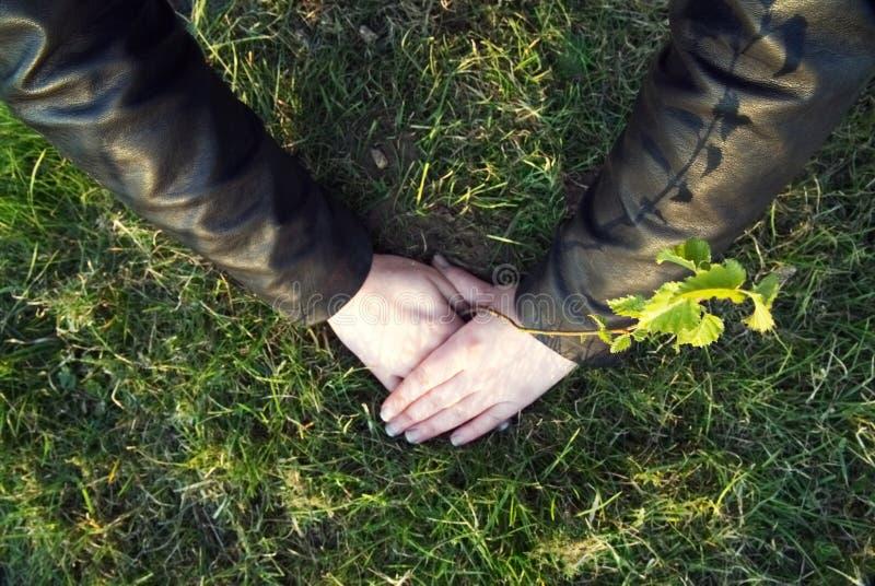 女孩种植一棵年轻树 图库摄影