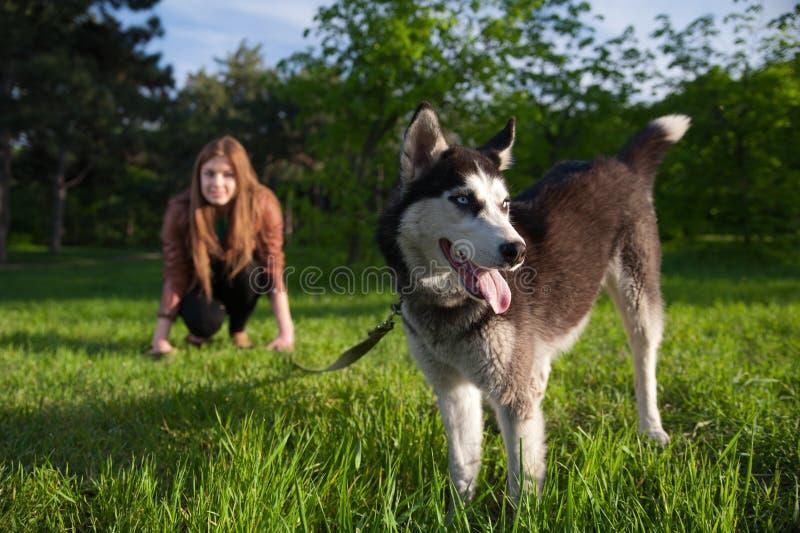 女孩获得与她多壳的狗的乐趣 免版税库存图片