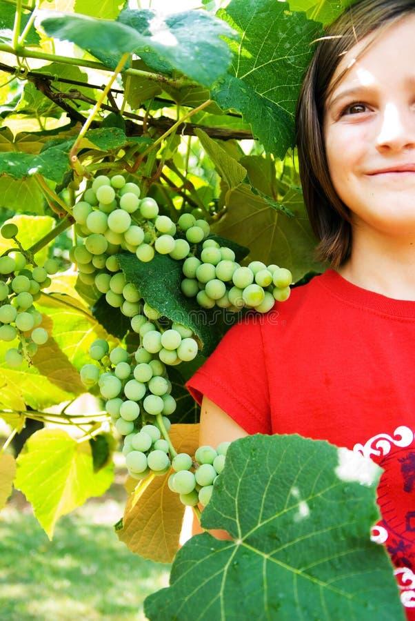 女孩葡萄圆叶葡萄 库存照片