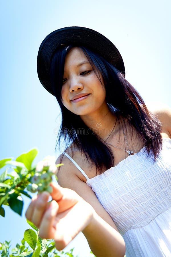 女孩蓝莓采摘 库存照片