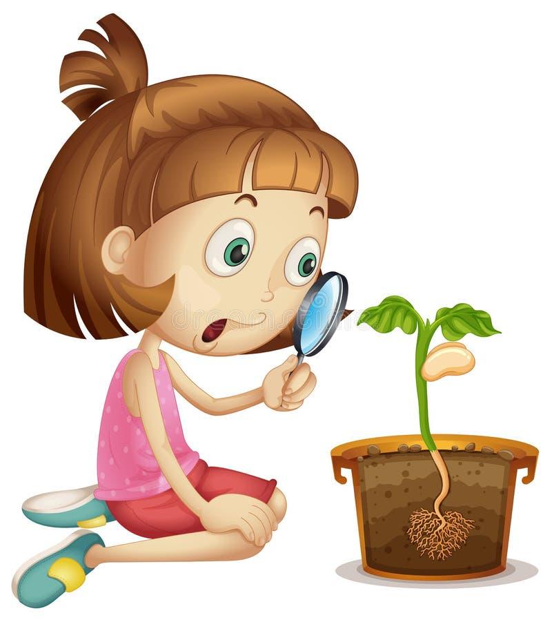 女孩观察植物生长在罐 皇族释放例证