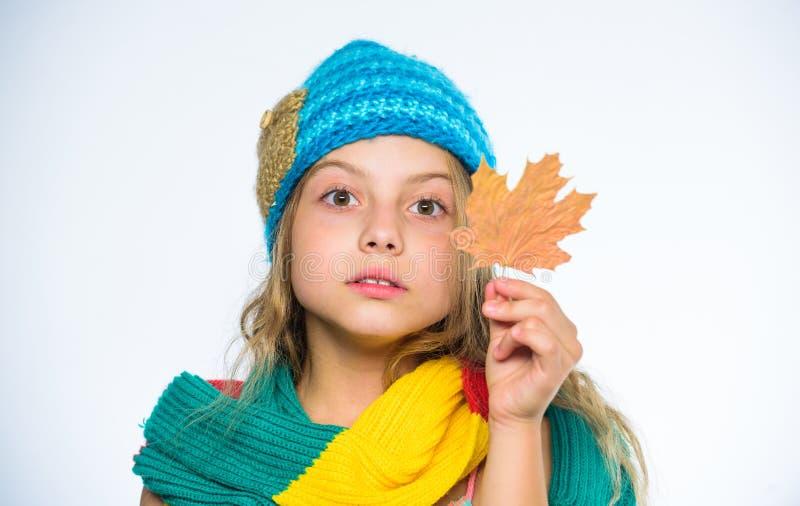 女孩逗人喜爱的面孔穿戴被编织的秋天帽子和围巾拿着叶子白色背景 秋天的护肤技巧 顶面秋天秀丽 免版税库存照片
