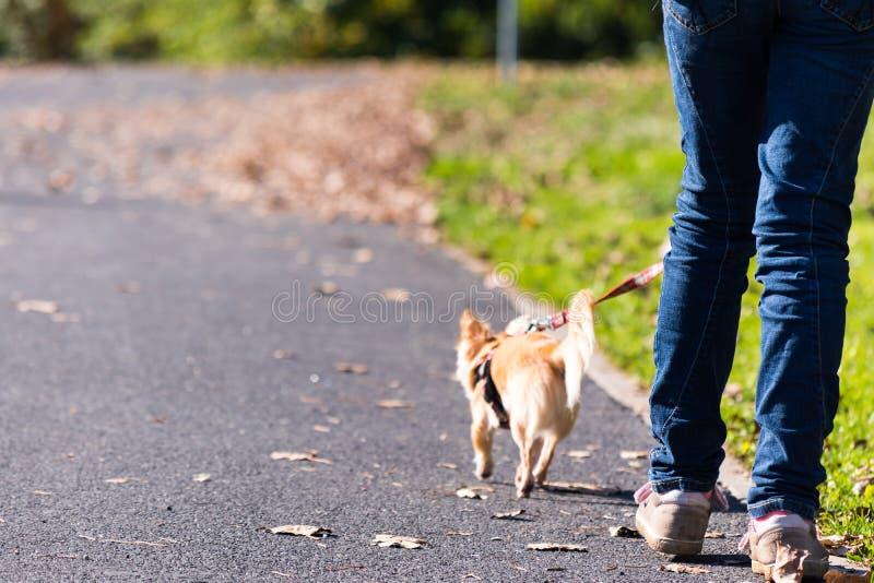 女孩采取walkies的狗 免版税库存照片