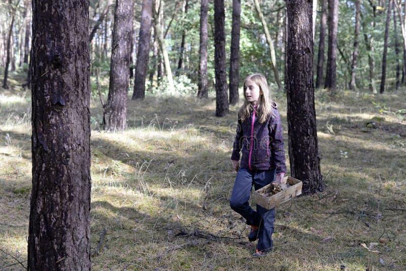 女孩采摘蘑菇 库存照片