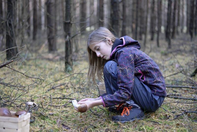 女孩采摘蘑菇 免版税图库摄影