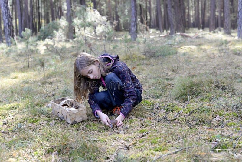 女孩采摘蘑菇 免版税库存照片