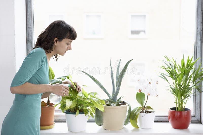 女实业家喷洒花盆的植物 免版税库存图片