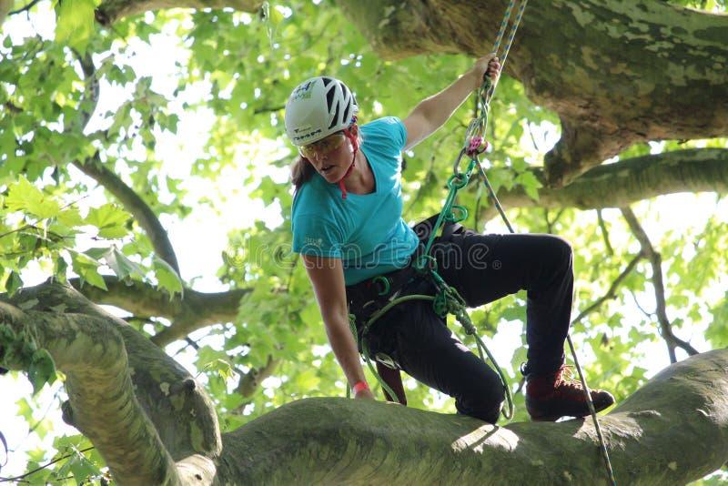 女性专业树登山人 免版税库存照片