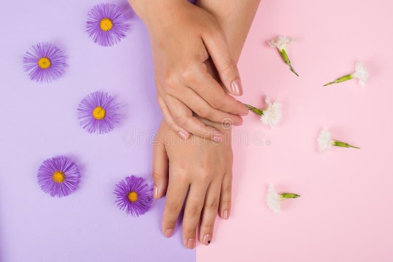 女性修指甲背景 手和钉子关心 在桃红色和紫色背景的美丽的年轻女人的手与花 手wi 免版税库存照片